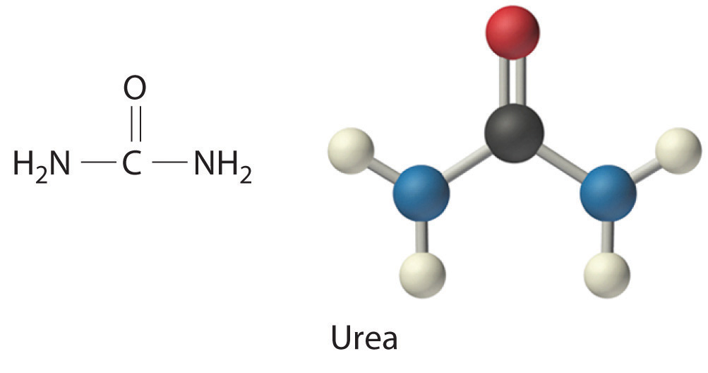 Big Urea molecule