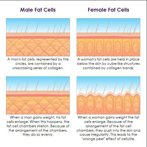 Book-Cellulite-Fat-Cells-Diagram