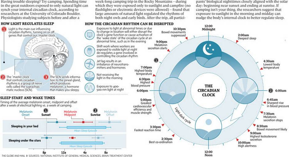Cicle circadian-jpg