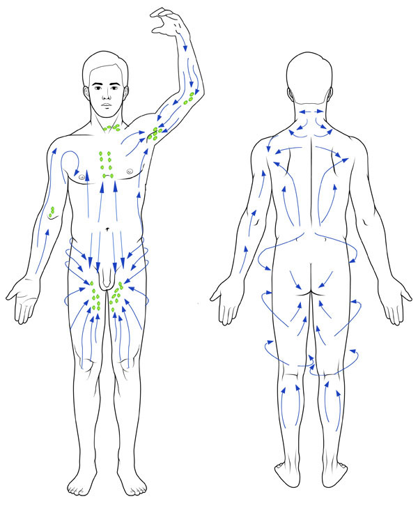 Direction-of-lymph-flow1