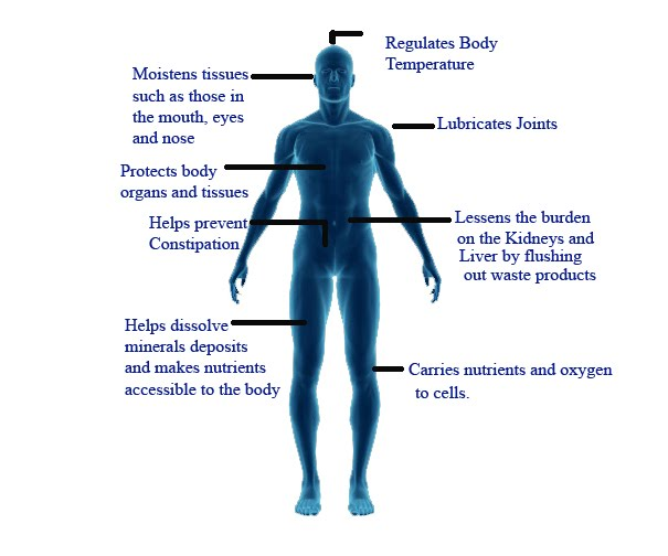 Function-of-Water-in-Body