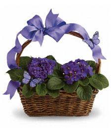 My Violet Blooming Garden