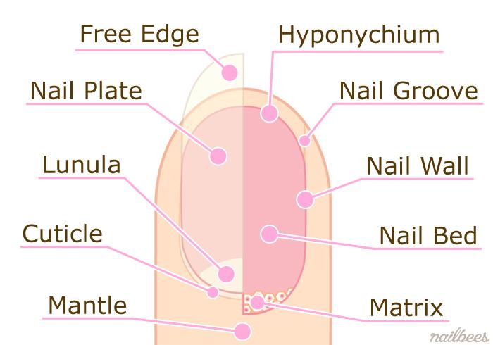 Nail-Diagram 1