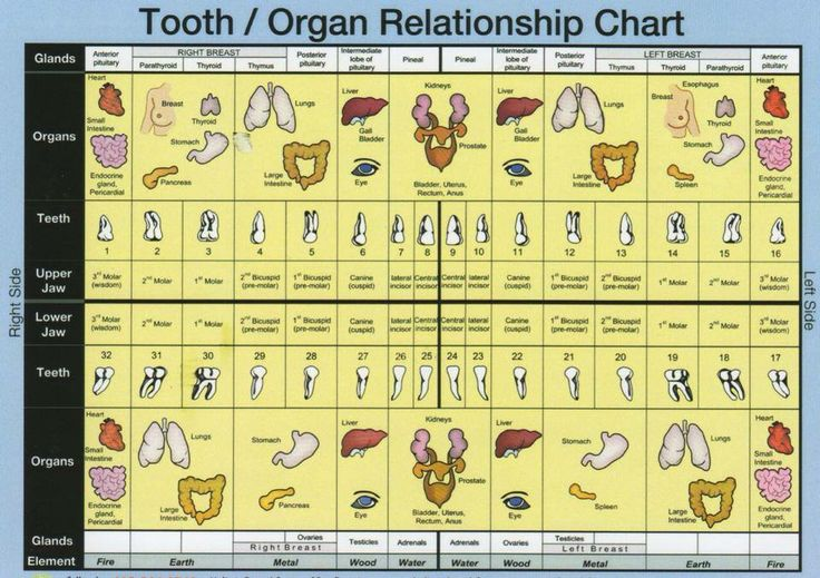Organ and teeth chart