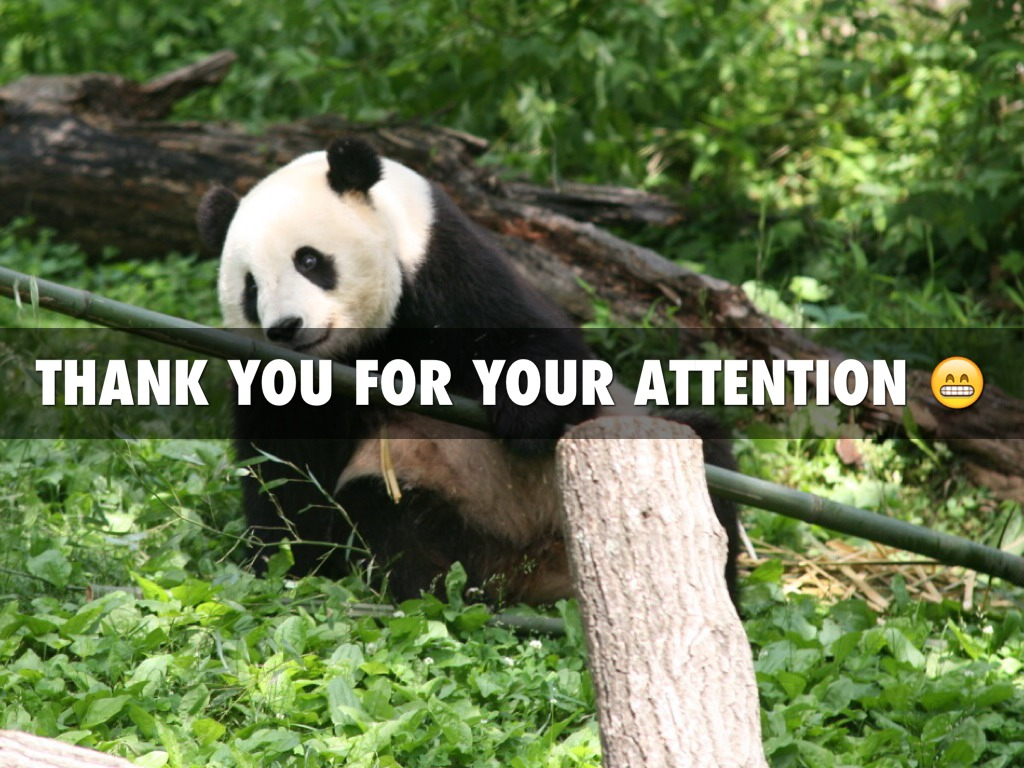 pandas-attention