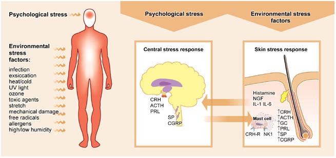 Stress Skin picture