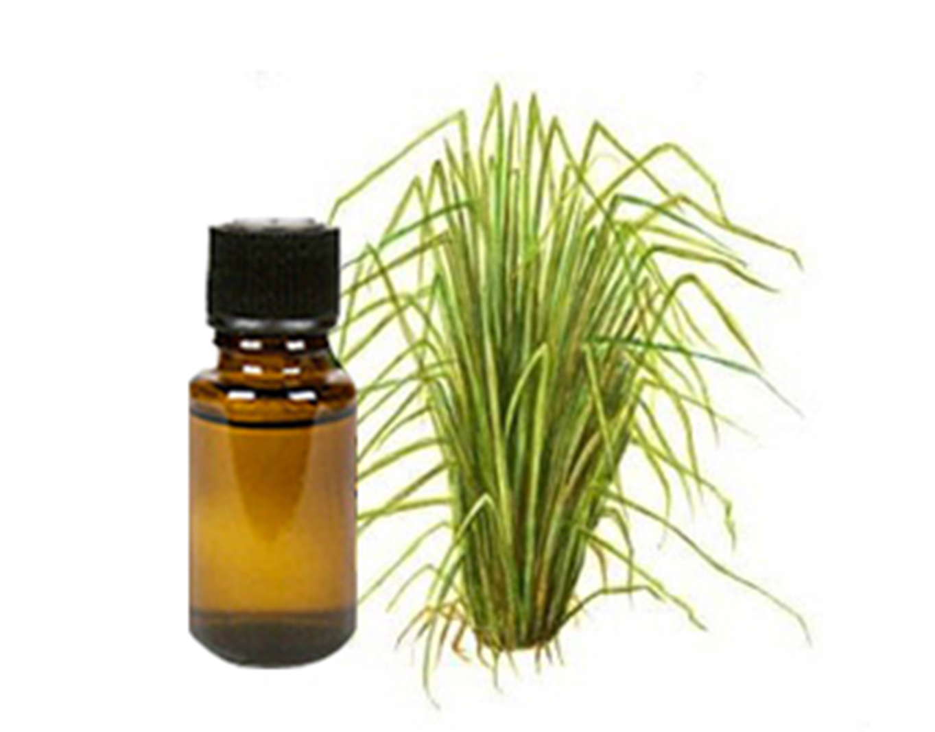 Vetiver (Khus) Essential Oil
