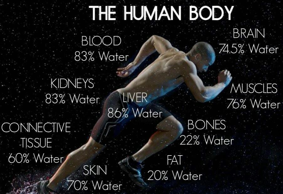 Water and the body