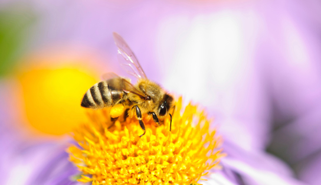 bee-flower-pollen-TS-160914205-628