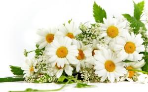 chamomile_flower