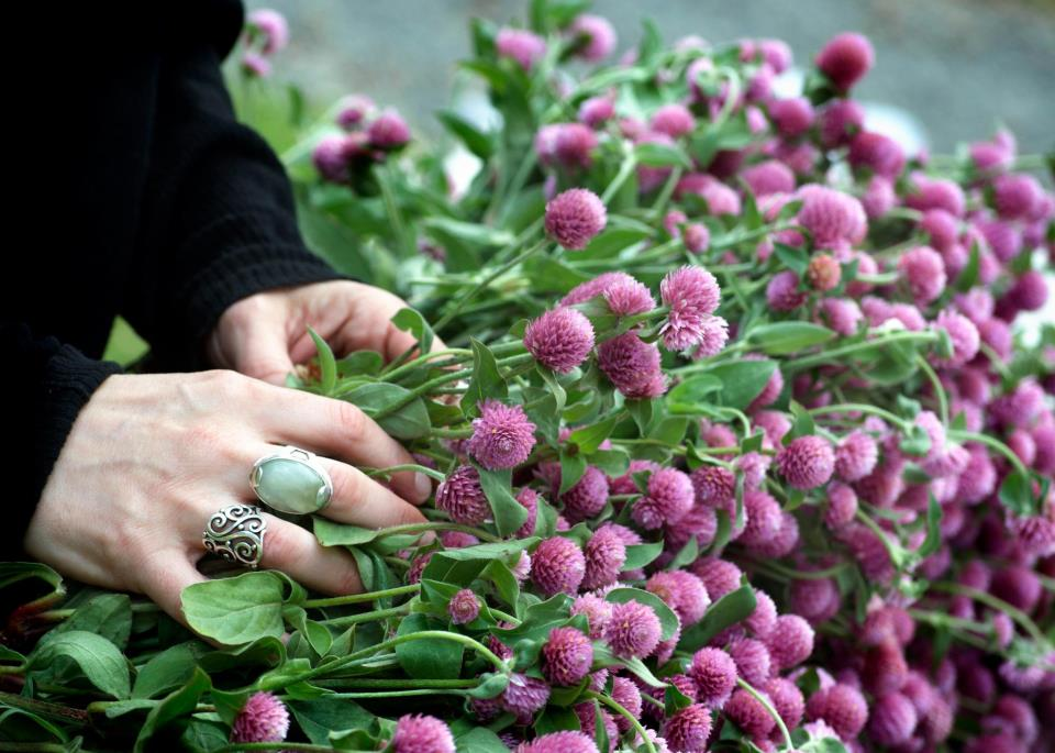 freshly-cut red clover