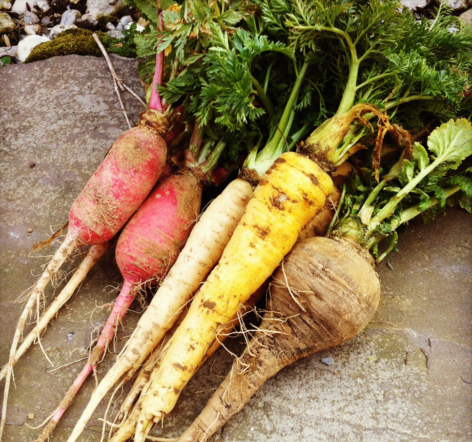 root-vegetables