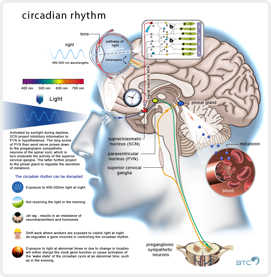 sleep_circadian_rhythm copy